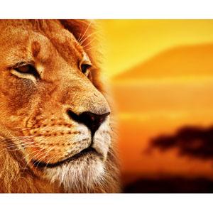 夕日とライオン