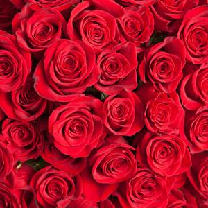 たくさんのバラ