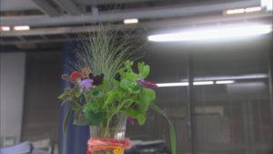 校閲部に飾られた花